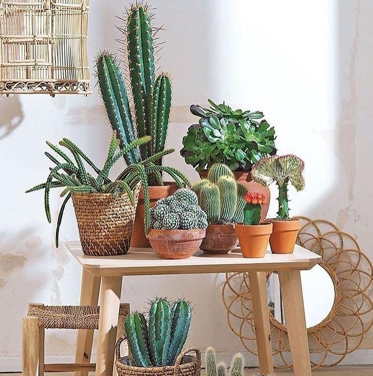cactusmagazine
